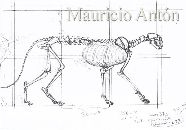 esqueleto m trumani 1 baja