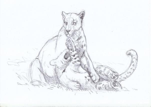 leopard family 2 baja